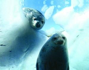 coml-seal
