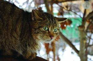 СЛОВЕСНИЙ_кіт_7