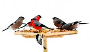 ptici-zimoy
