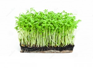 http://www.dreamstime.com/royalty-free-stock-photos-fresh-garden-cress-isolated-white-background-image30142488