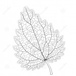 http://www.dreamstime.com/royalty-free-stock-images-isolated-vector-monochrome-nettle-leaf-image43893349